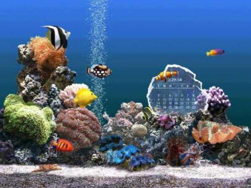 SereneScreen Marine Aquarium 3.0